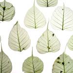 LAIN Leaves  G02